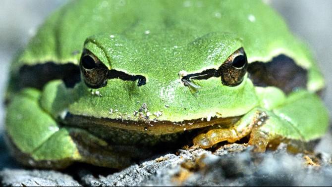 El uso de los sentidos para el rastreo y la observación de fauna